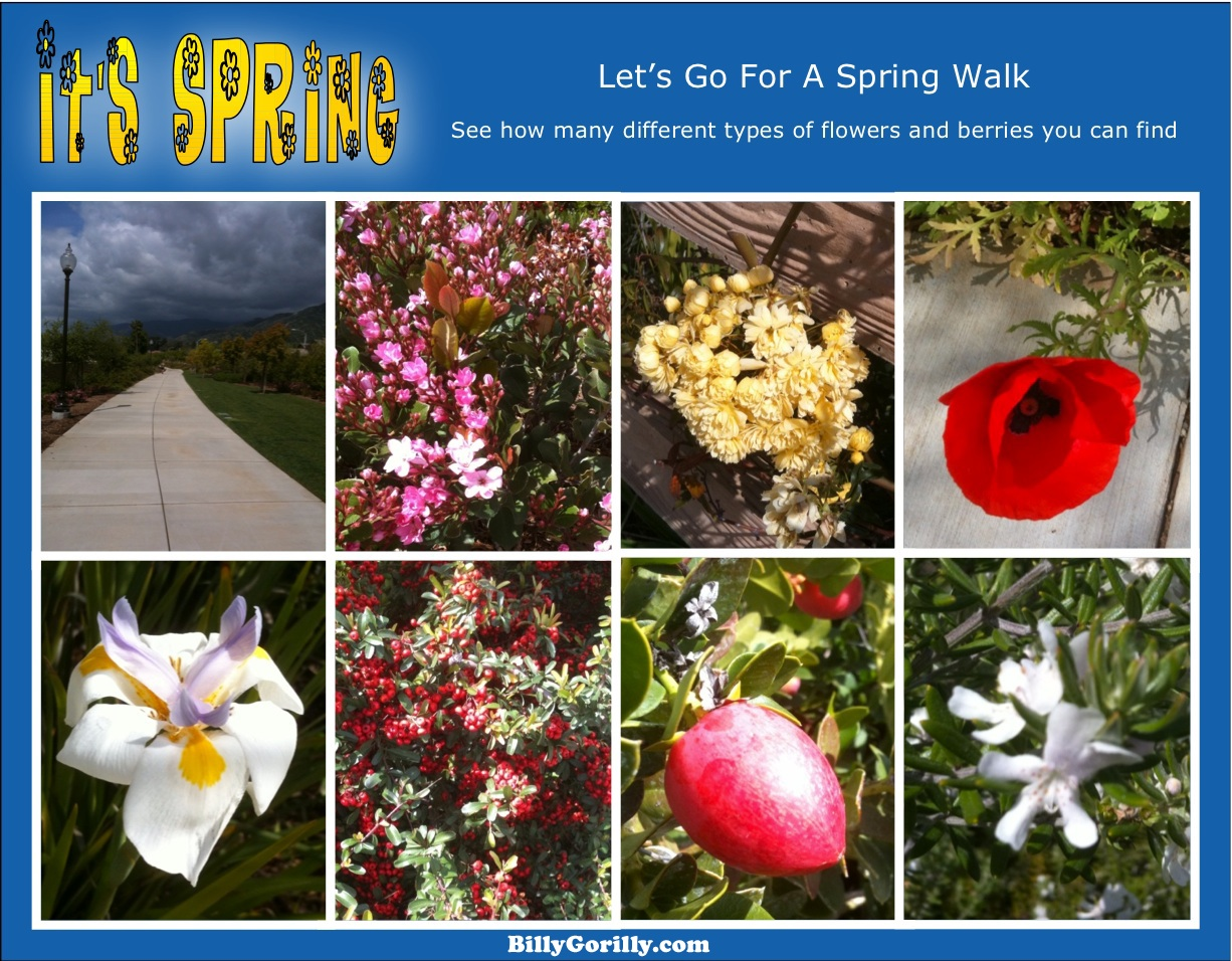 Click the Image to view Larger picture - Flowers along walking path