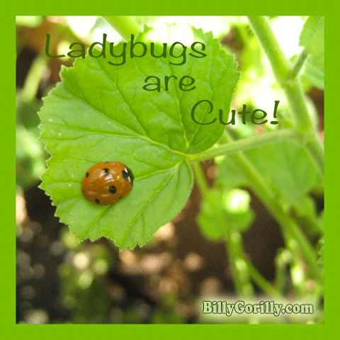 Ladybugs Are Cute