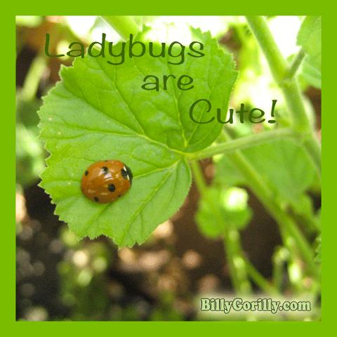 Ladybugs Are Cute