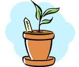 sprouting plant in clay pot