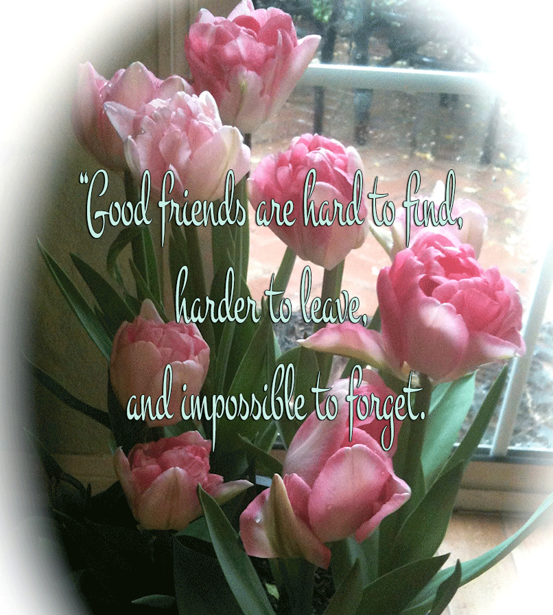Tulips from Charles Hardman's Garden
