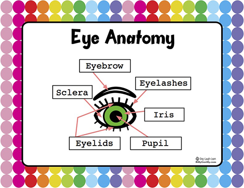 Basic Eye Anatomy Chart for Kids for the sense of sight